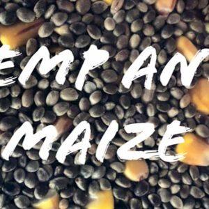 hemp and maize